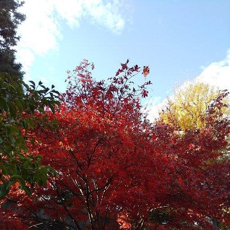 紅葉も見頃の皇居内