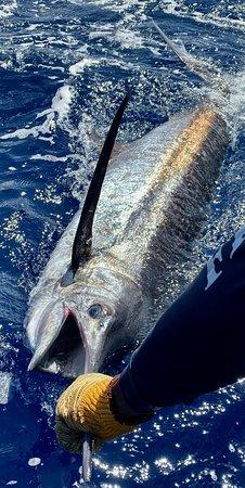 Blue Marlin St Lucia