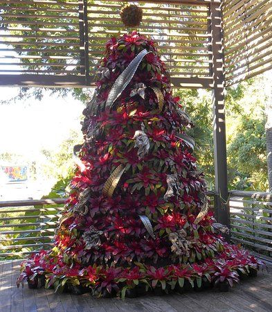 This bromeliad tree was such a stroke of genius! Unlike poinsettias, these plants will easily last throughout the holiday season, will never droop, and require minimal watering that can be accomplished with mist from a hose.
