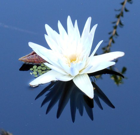 The lily ponds are filled with beauties like this.