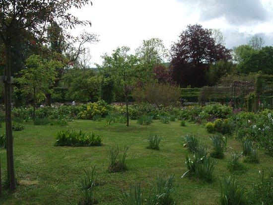A daffodil lawn