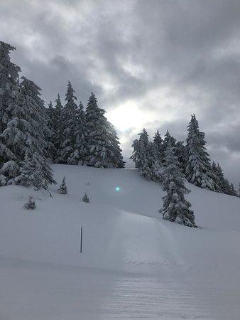 Après la neige le soleil
