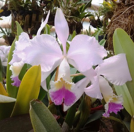 Colombian orchids tour