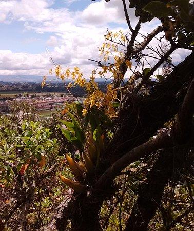 Siembra una orquídea en el bosque