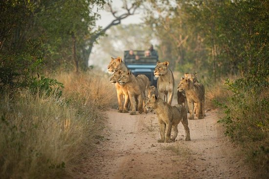 Roi Lion Safaris & Excursions