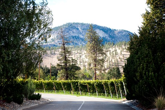Jackson -Triggs Okanagan Estate