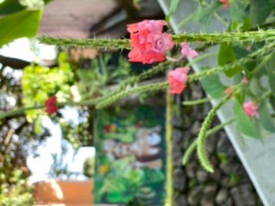 Ciudad Cariari, Costa Rica: Garten