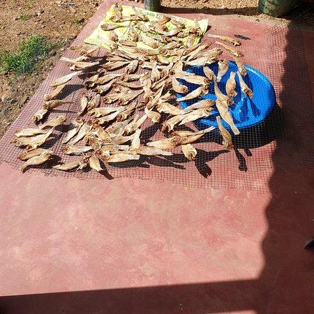 Kantale, Sri Lanka: Dry fish