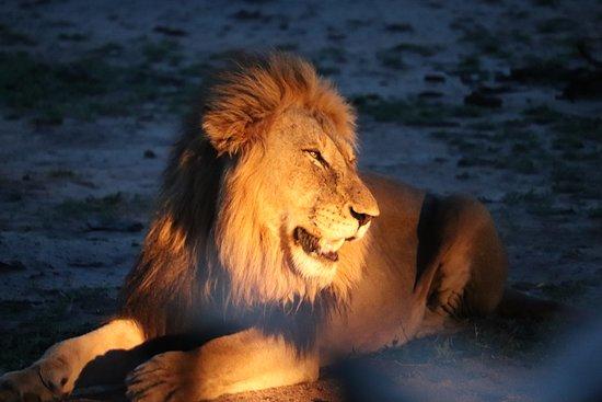 Djuma Game Reserve, Sudáfrica: 1st safari on arrival.
