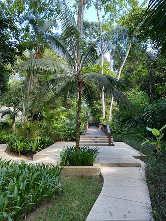 Walk through the jungle to the beach at the end of the Butterfly Walk