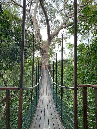 The Canopy Walk - great experience by Nature Center.