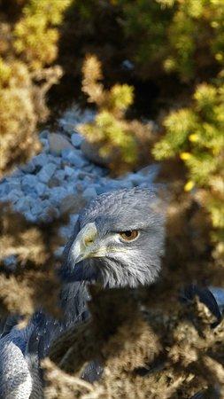 Eagle at Jardin de Las Aguilas
