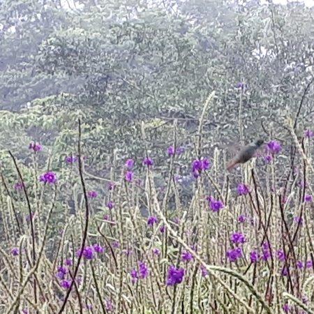 Un colibri saisi au vol (pas facile !)