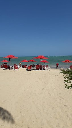 Sombrillas y reposeras en la playa