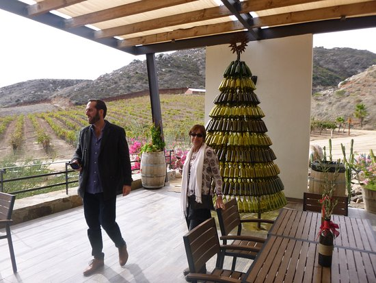 Full-Day Wine and Tastings Tour in Valle De Guadalupe: Ryan explaining a little about La Reina.