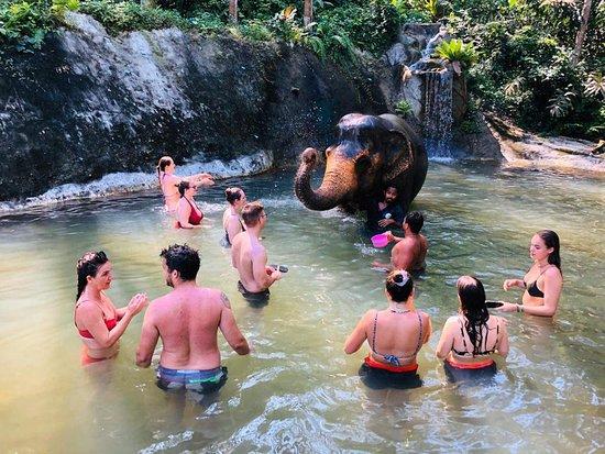 Mesto Phuket, Thajsko: CHALONG ELEPHANTS RETIREMENT