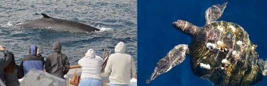San Diego, CA: Learn more about what you will see on your trip. Our website has a wealth of information on the amazing animals that we see. Visit https://sdwhalewatch.com/what-we-see/ for more information.