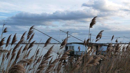 Capanno di pesca tra le canne al vento nelle valli di Comacchio.