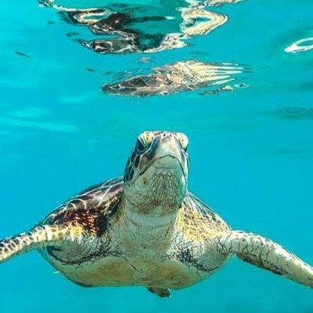 Mar Rosso, pesci, coralli e tartarughe