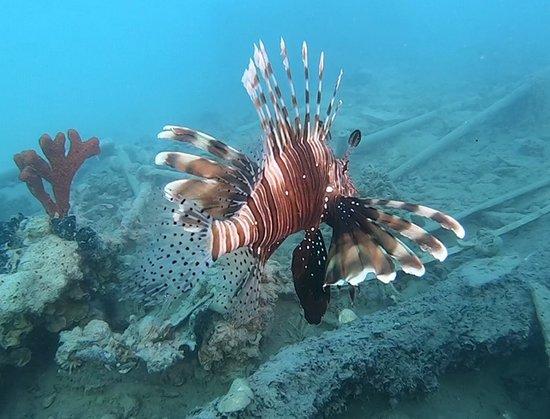 Hurgada, Egypt: Lionfish
