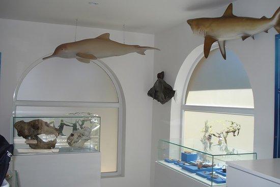 sala marina en el museo de ciencias naturales de miramar punta hermengo