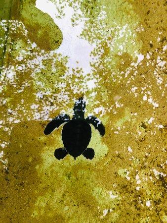 A visit to Galbokka Sea Turtle Center