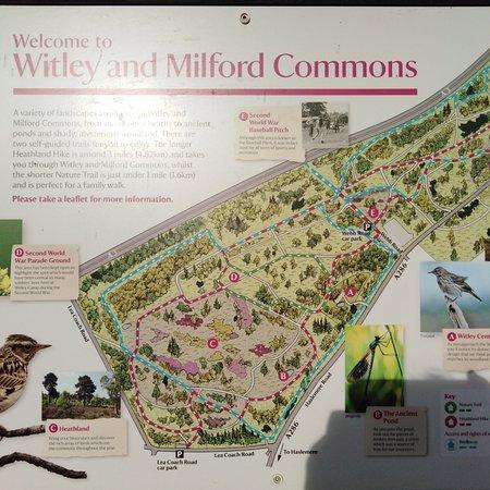Witley, UK: A lovely walk