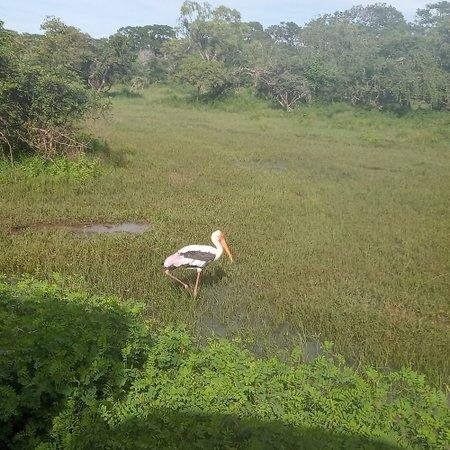 Beautiful yala national park safari