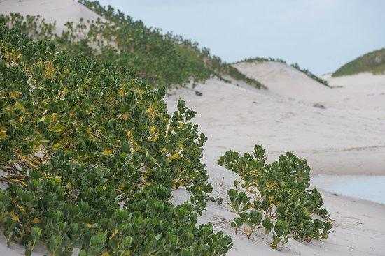 Vegetation on the island Benguerra