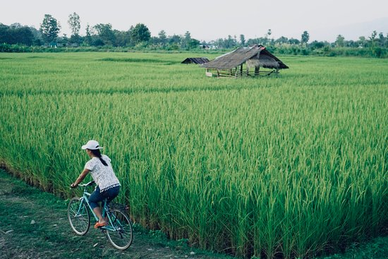 DaiDib DaiDee Permaculture Thailand