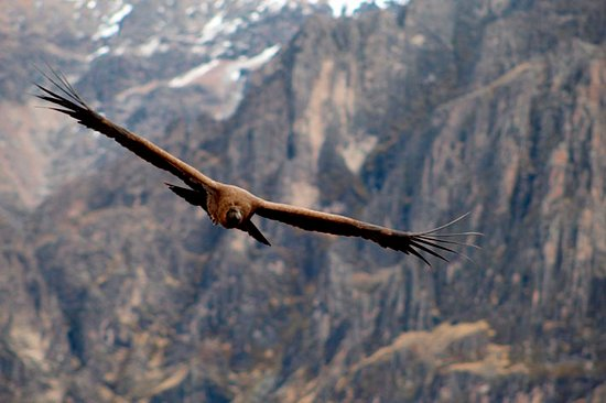 Condor´s flying - Enjoy the experience!!!