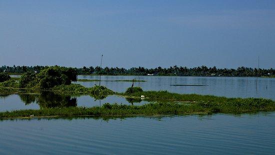 bird and backwaters close to Kochi