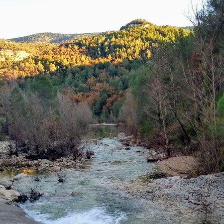 Bosques de la Tinença de Benifassar entre Rosell y Vallibona