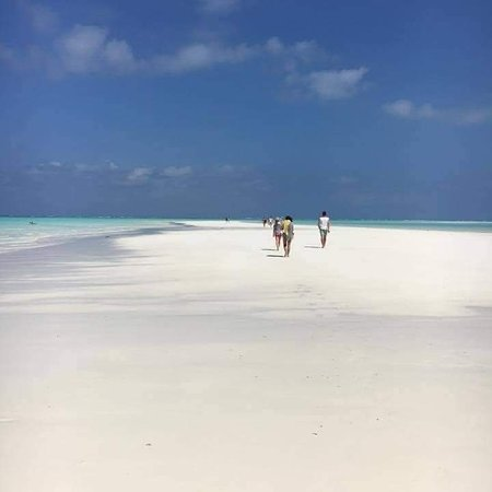 Welçome to Tanzania and enjoy the nature of Tanzania and and in your holiday work with mwalo tours _& safaris in Zanzibar island where you can enjoy your time and your holiday in Tanzania