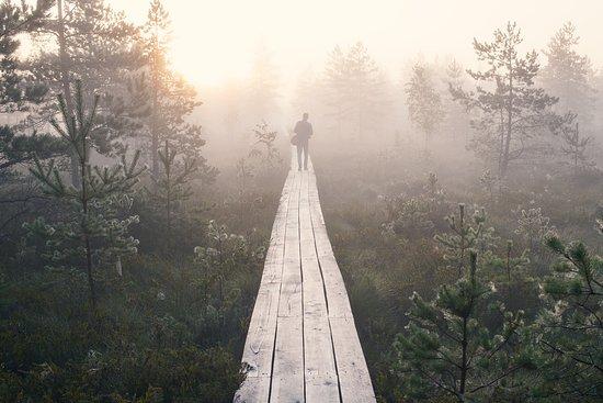 Early morning at the bog, Latvia