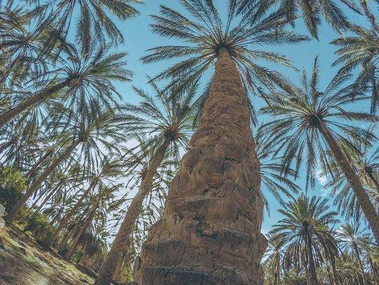 Douz, Tunesien: Palette and palm trees