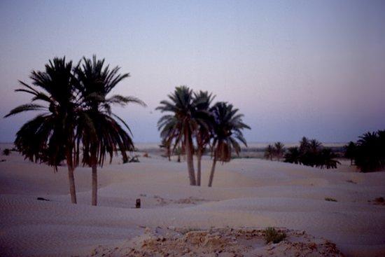 dating webbplatser Tunisien