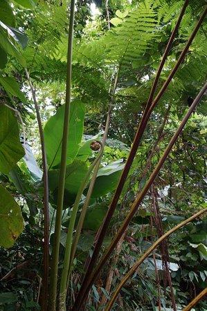 Laissez-moi vous montrer MON île! (avec visite à El Yunque) : In the tropical rain forest