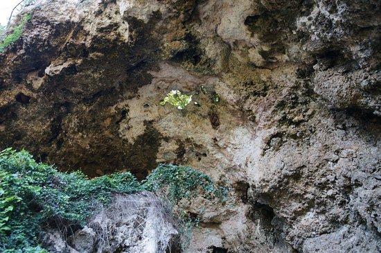 Lascia che ti mostri la MIA isola! (con visita a El Yunque): Cavern ceiling