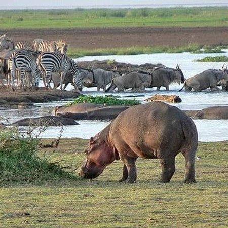 הפארק הלאומי אגם מניארה, טנזניה: Welcome to Tanzania and enjoy the nature of the world in tanazania at lake manyara national park where you can see different kind of animal and climbing lion