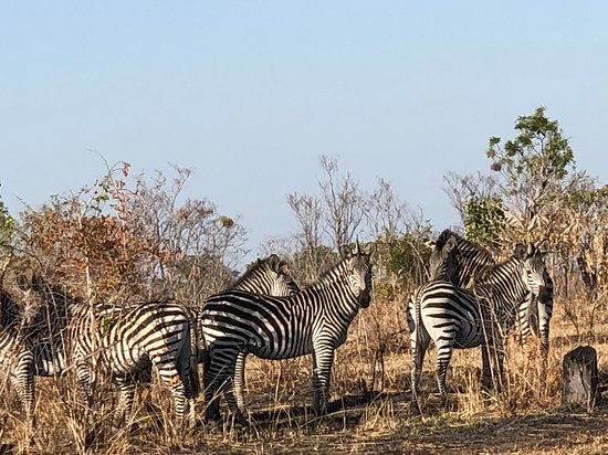 North Luangwa National Park, แซมเบีย: Zebra