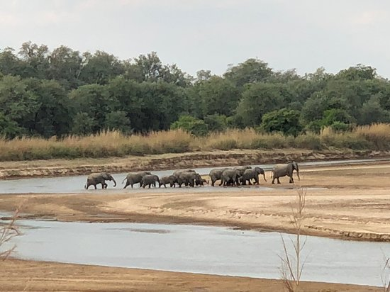 North Luangwa National Park, แซมเบีย: Elephant crossing