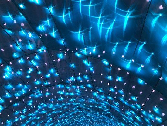 Dans le ventre du grand requin blanc, à l'exposition «Océan en Voie d'Illumination» du Jardin des Plantes de Paris