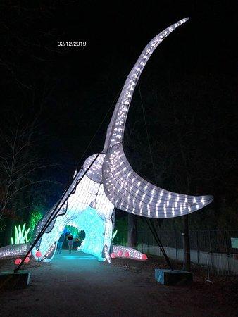 La queue du grand requin blanc, à l'exposition «Océan en Voie d'Illumination» du Jardin des Plantes de Paris