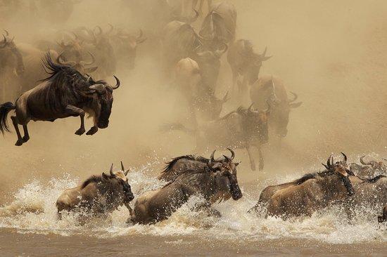 Natural History Safari