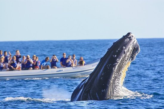 Privat transport hvalsafari Los Cabos