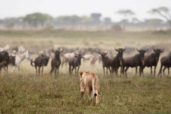 7 DAYS / 6 NIGHTS NORTHERN SERENGETI WILDEBEEST MIGRATION PRIVATE SAFARI