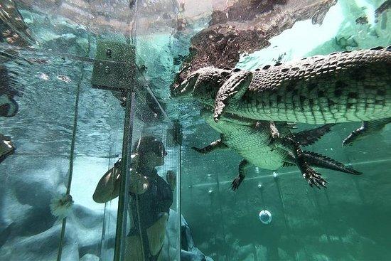 Ultimate Adrenaline Cage Diving Croc...