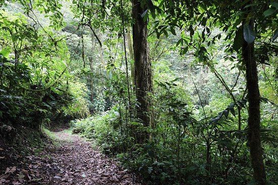 The Children's Rain Forest Hike -Day Trip From Arenal