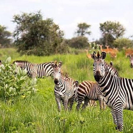 Welcome to Tanzania and enjoy the nature of Tanzania in your holiday in Arusha national park